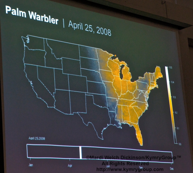 Palm Warbler Chart, Marshall J. Iliff, eBird AKN Project Leader; COA 29th Annual Meeting, Middlesex Community College. ©Mardi Welch Dickinson/KymryGroup™. All Rights Reserved.