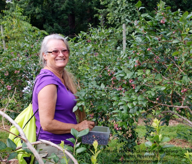 Relly Coleman, Westport, CT;  Picking blueberries in the orchards at Aspetuck Land Trust property of Trout Brook Valley Preserve on August 1, 2013. ©Mardi Welch Dickinson/KymryGroup. All Rights Reserved.