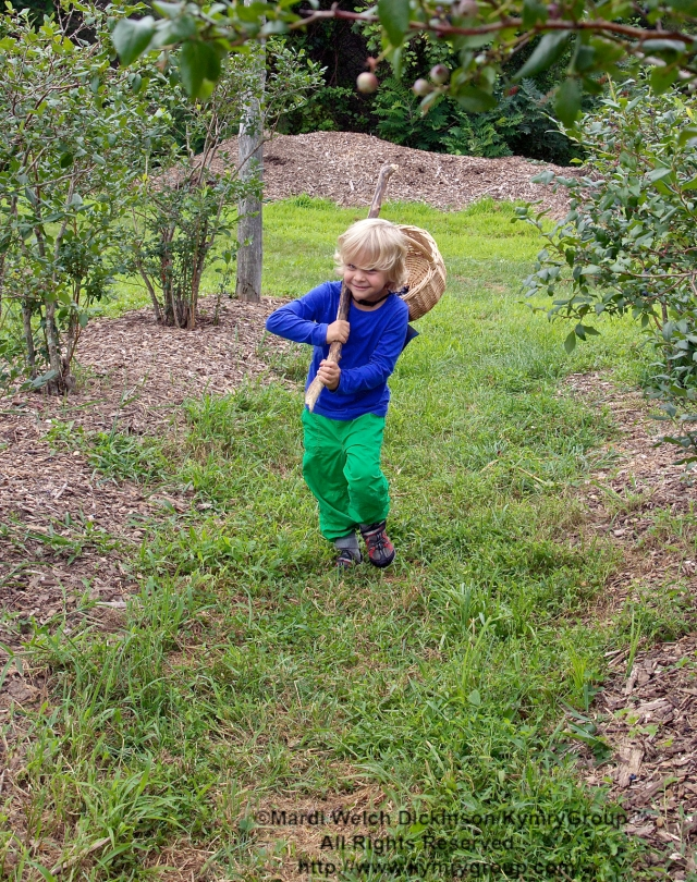 Luke Mulligan, grandson of Bud Martin, Weston CT, Board Member & Event Organizer, Aspetuck Land Trust; Caring a basket of blueberries in the orchards at Aspetuck Land Trust property of Trout Brook Valley Preserve on August 1, 2013. i©Mardi Welch Dickinson/KymryGroup All Rights Reserved.
