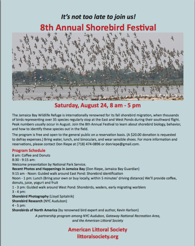 8th Annual Shorebird Festival  at Jamacia Bay 2013