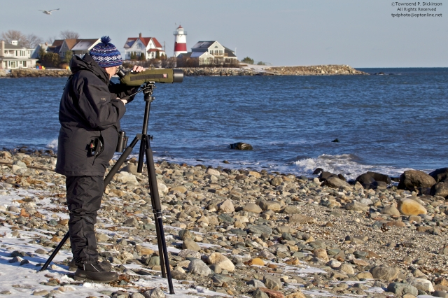 Mardi Dickinson scoping for winter birds. Cove Place area beach, Stratford, CT. ©Townsend P. Dickinson. All Rights Reserved.