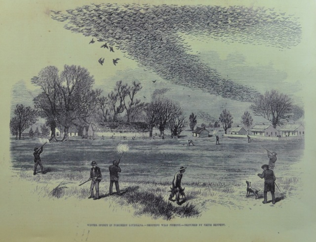 "Shooting Wild Pigeons in Northern Louisiana is based on a sketch by smith Bennett and apppeared in the Illustrated Sporting and Dramatic News of July 3, 1875. Schorger consedered this picture to be particularly accurate (From the collection of Garrie Landry). Courtesy of Bloomsbury USA, New York Publisher. Joel Greenberg, author talk on ""A Feathered River across the Sky. The Passenger Pigeon's Flight To Extinction"" at Yale School of Forestry & Environmental Studies. New Haven, CT. March 12, 2014. ©Mardi Welch Dickinson/KymryGroup"