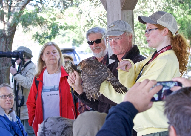 Hawkwatch Demonstration at Cape May Point Pavilion. for the Cape May Fall Festival 2015. Cape May Point State Park, Cape May, NJ. ©Townsend P. Dickinson All Rights Reserved.