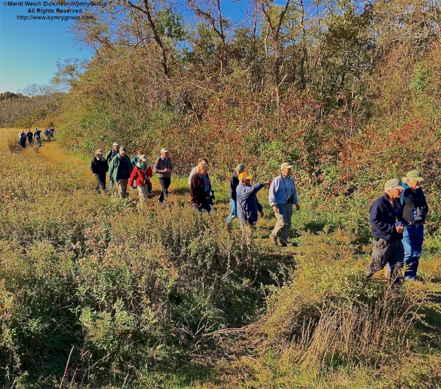 Cape May Fall Birding Festival had dozens of walks with expert leaders ongoing in Field #1 at the Higbee Beach Wildlife Management Area, West Cape May, NJ.
